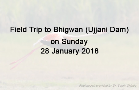 Field Trip to Bhigwan (Ujjani Dam) on Sunday 28 January 2018