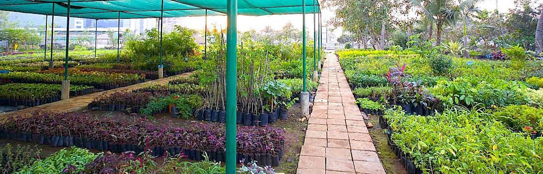 A-green-choice-at-the-Magarpatta-City-nursery